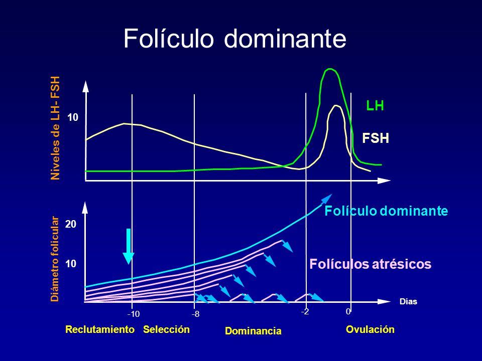 Folículo dominante LH FSH Folículo dominante Folículos atrésicos
