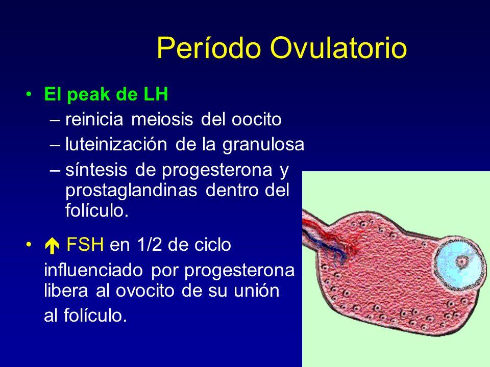 Período Ovulatorio El peak de LH reinicia meiosis del oocito