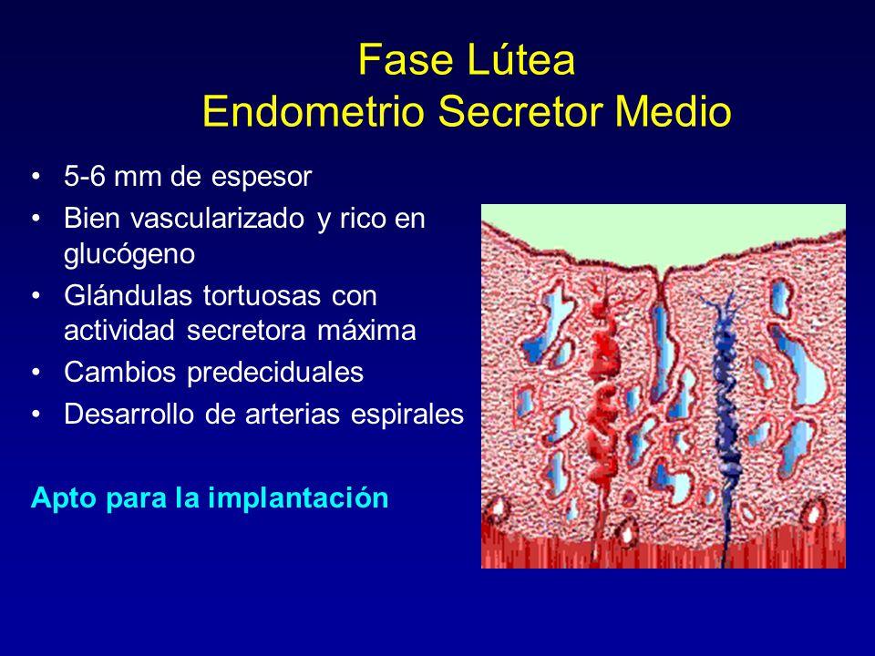 Fase Lútea Endometrio Secretor Medio