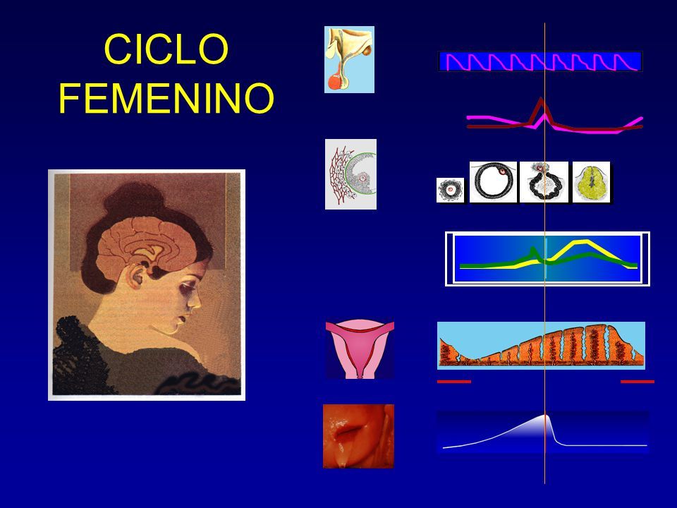 CICLO FEMENINO
