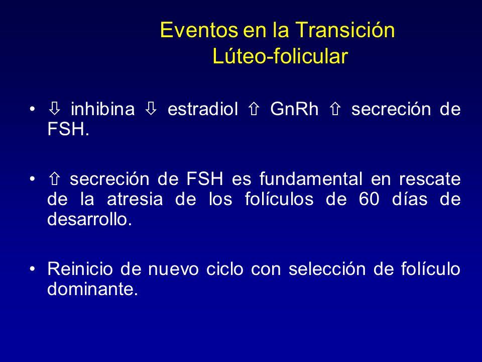 Eventos en la Transición Lúteo-folicular