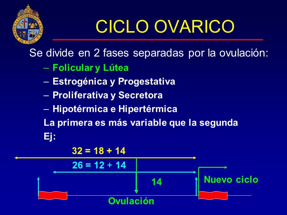 CICLO OVARICO Se divide en 2 fases separadas por la ovulación: