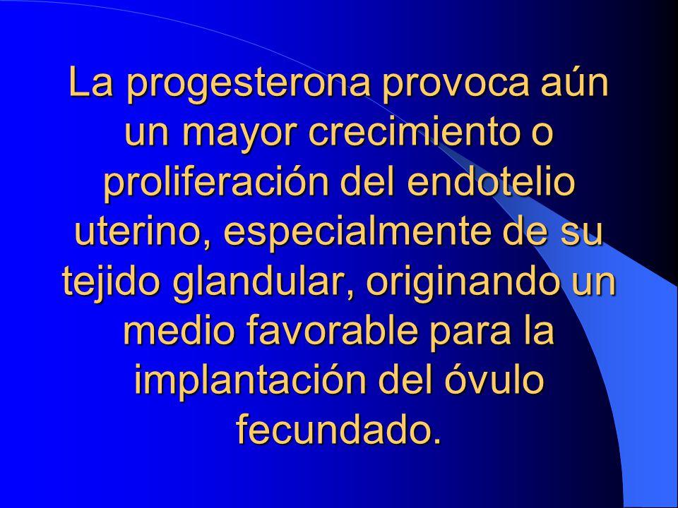 La progesterona provoca aún un mayor crecimiento o proliferación del endotelio uterino, especialmente de su tejido glandular, originando un medio favorable para la implantación del óvulo fecundado.