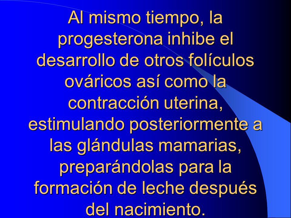 Al mismo tiempo, la progesterona inhibe el desarrollo de otros folículos ováricos así como la contracción uterina, estimulando posteriormente a las glándulas mamarias, preparándolas para la formación de leche después del nacimiento.