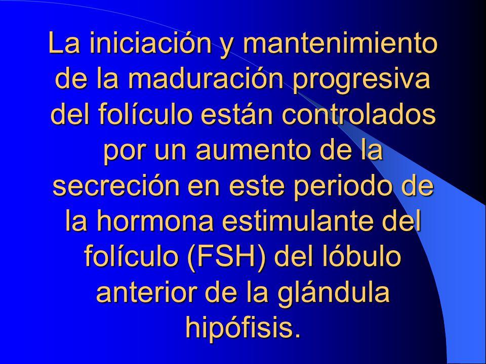 La iniciación y mantenimiento de la maduración progresiva del folículo están controlados por un aumento de la secreción en este periodo de la hormona estimulante del folículo (FSH) del lóbulo anterior de la glándula hipófisis.