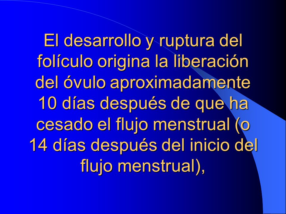 El desarrollo y ruptura del folículo origina la liberación del óvulo aproximadamente 10 días después de que ha cesado el flujo menstrual (o 14 días después del inicio del flujo menstrual),
