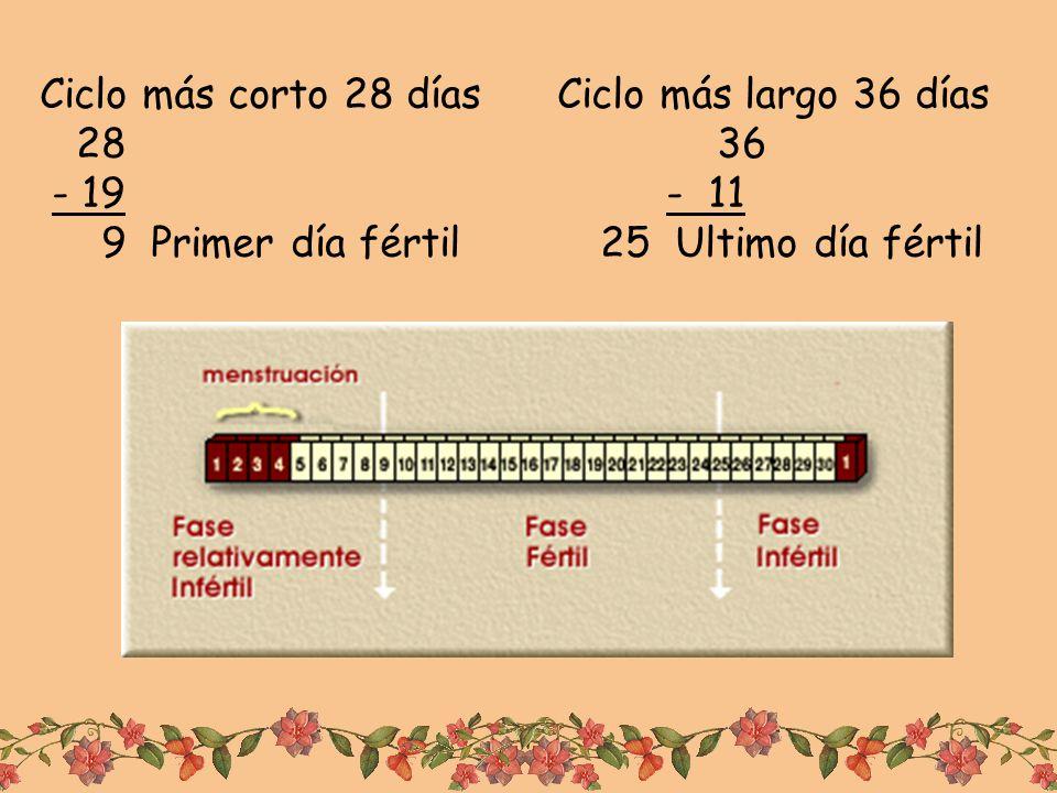 Ciclo más corto 28 días Ciclo más largo 36 días 28 36 - 19 - 11 9 Primer día fértil 25 Ultimo día fértil