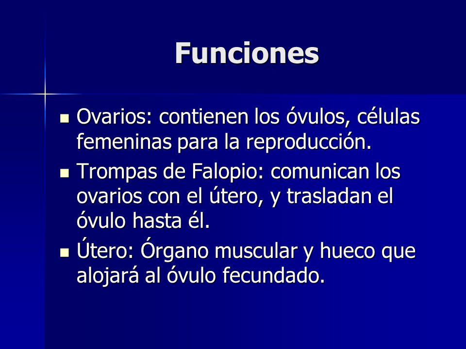 Funciones Ovarios: contienen los óvulos, células femeninas para la reproducción.
