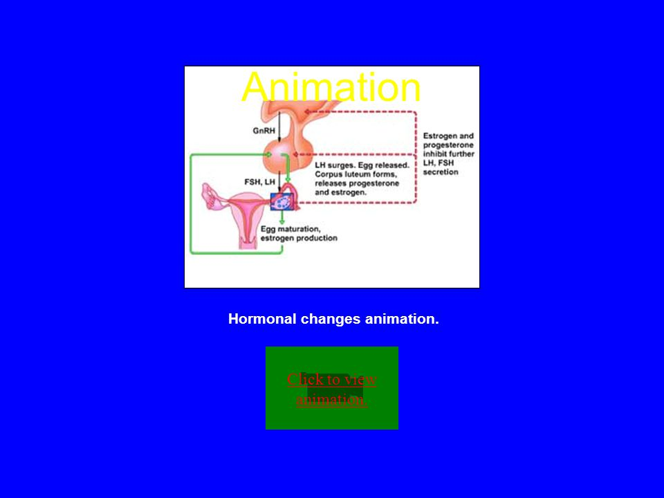 Hormonal changes animation.