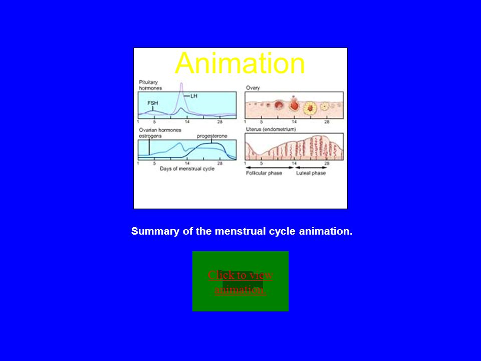 Summary of the menstrual cycle animation.