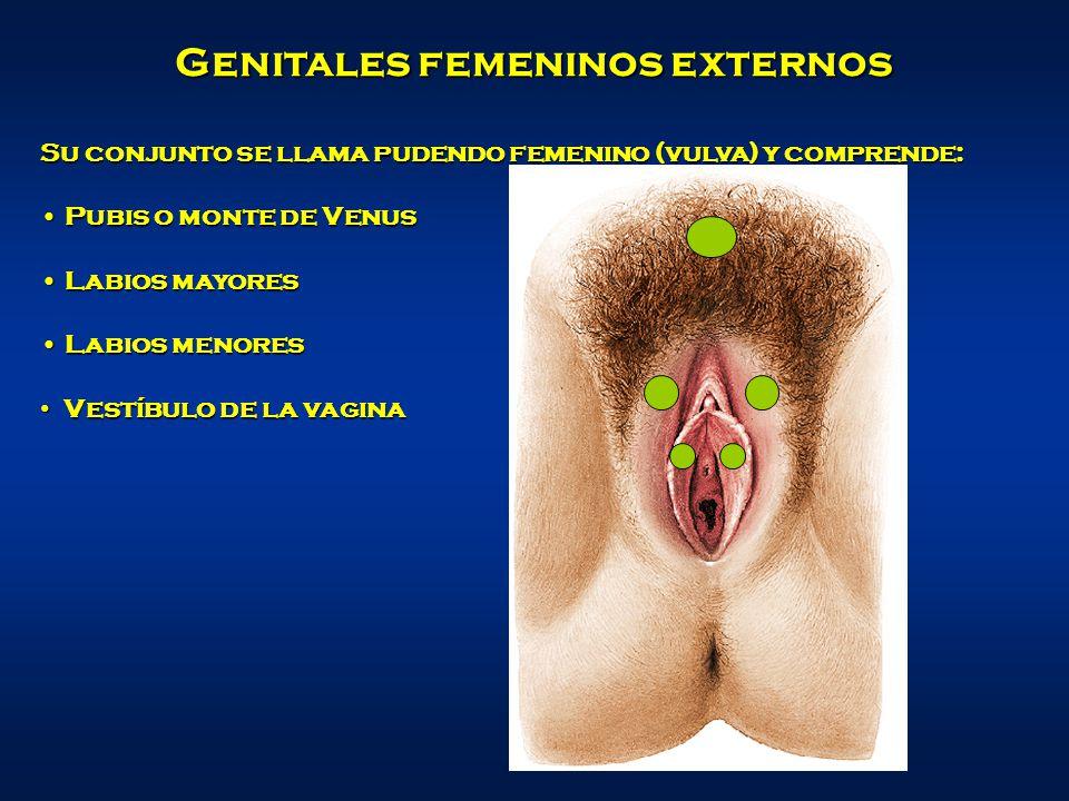 Genitales femeninos externos
