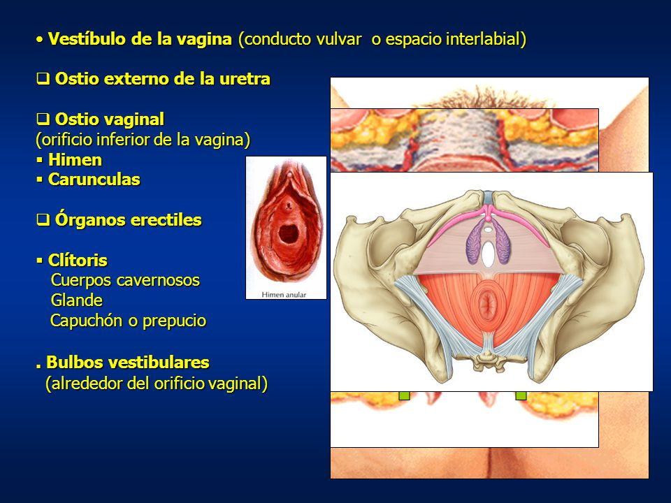 Vestíbulo de la vagina (conducto vulvar o espacio interlabial)