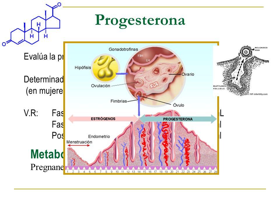 Progesterona Metabolitos de la Progesterona: