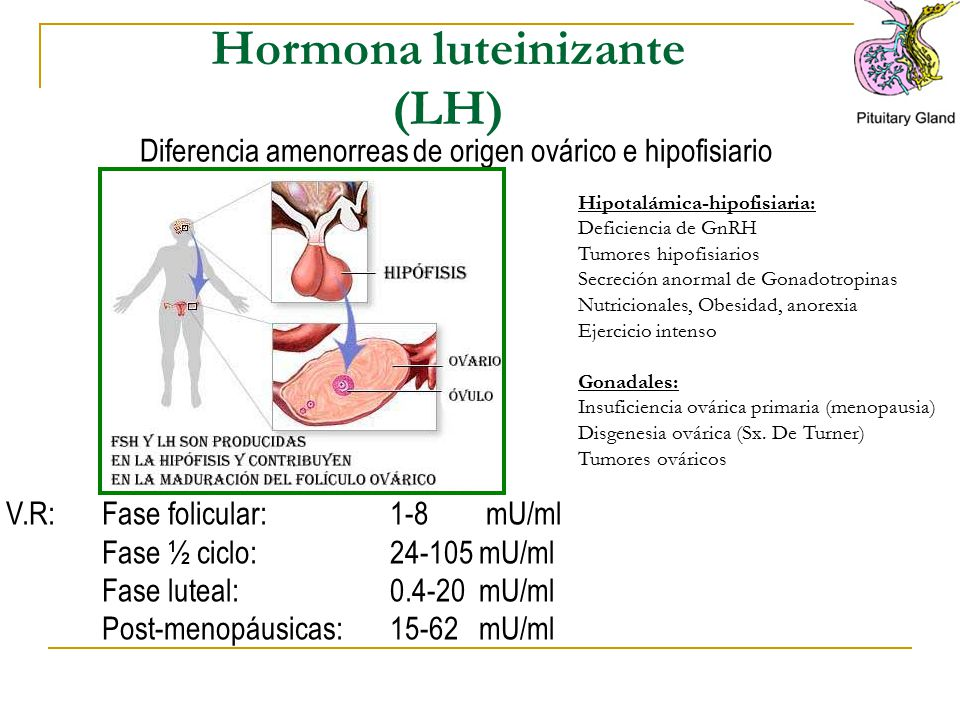 Hormona luteinizante (LH)