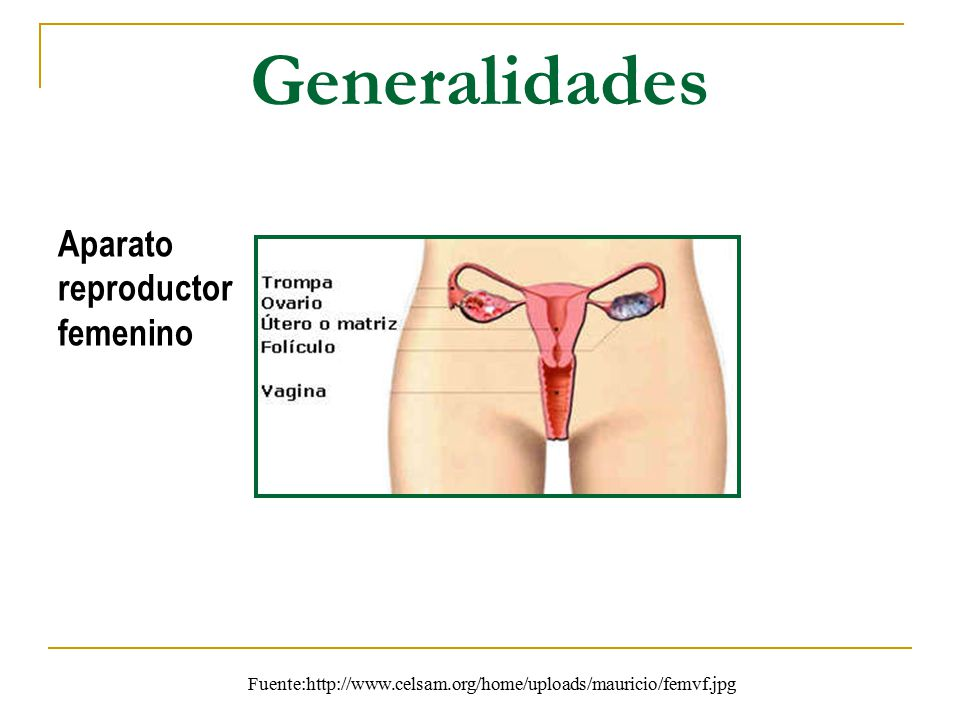 Generalidades Aparato reproductor femenino