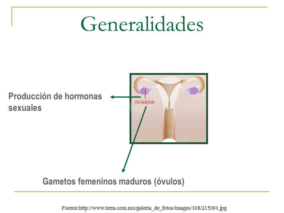 Generalidades Producción de hormonas sexuales