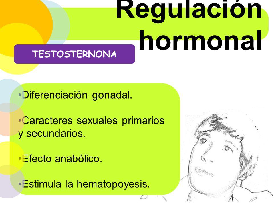 Regulación hormonal Diferenciación gonadal.