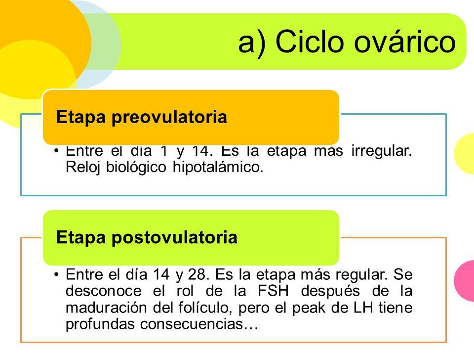 a) Ciclo ovárico Etapa preovulatoria Etapa postovulatoria