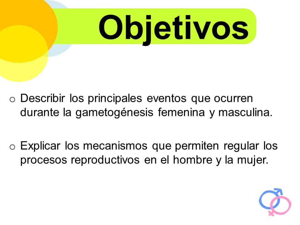 Objetivos Describir los principales eventos que ocurren durante la gametogénesis femenina y masculina.