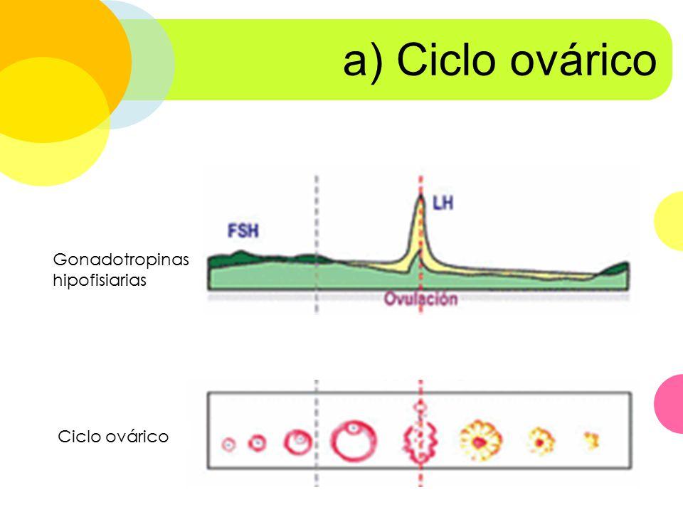 a) Ciclo ovárico Gonadotropinas hipofisiarias Ciclo ovárico
