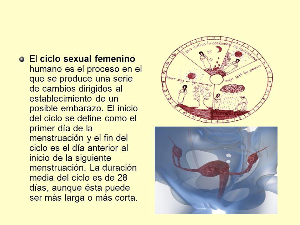 El ciclo sexual femenino humano es el proceso en el que se produce una serie de cambios dirigidos al establecimiento de un posible embarazo.