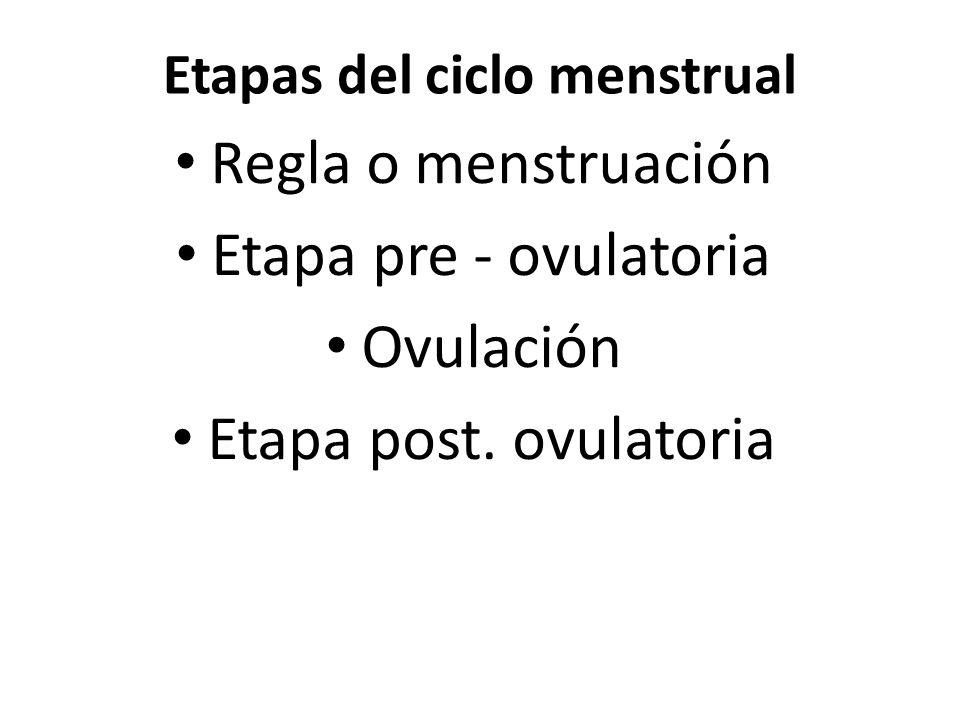 Etapas del ciclo menstrual