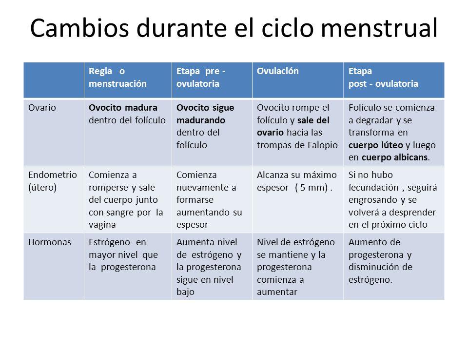 Cambios durante el ciclo menstrual