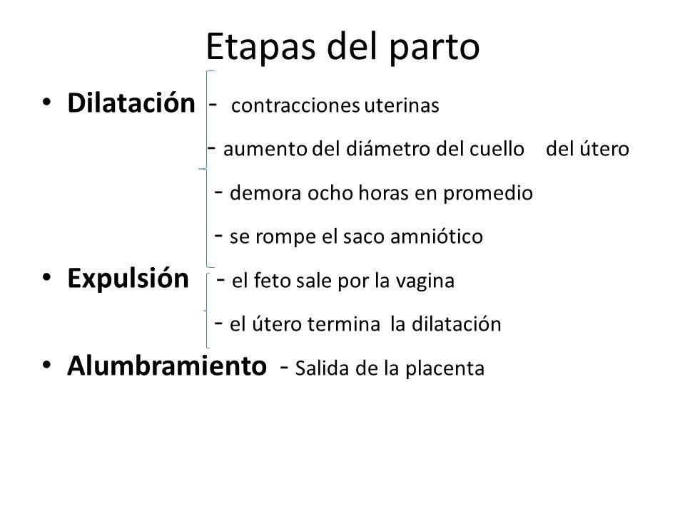 Etapas del parto Dilatación - contracciones uterinas