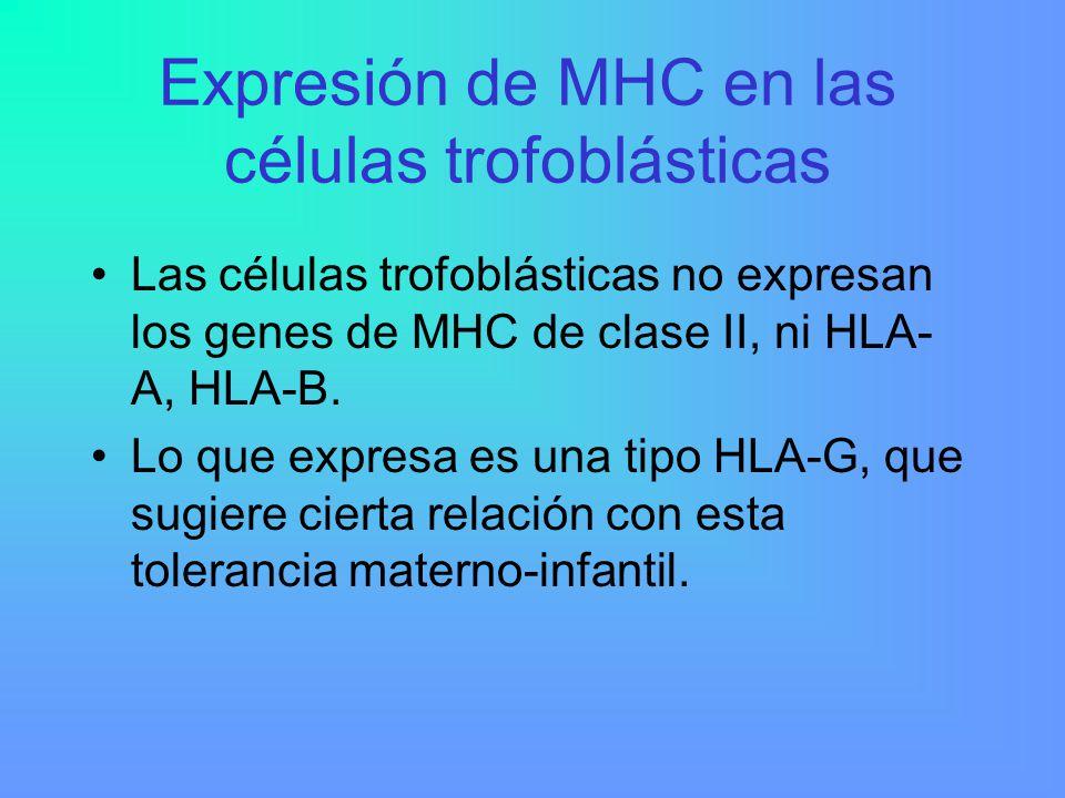 Expresión de MHC en las células trofoblásticas