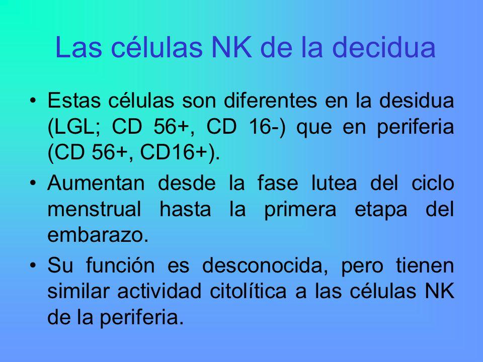 Las células NK de la decidua