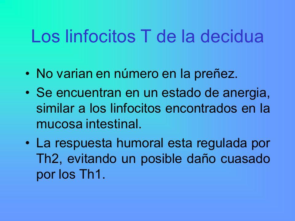 Los linfocitos T de la decidua