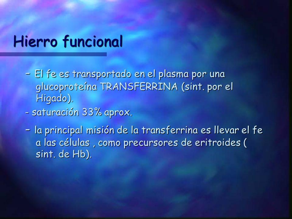 Hierro funcional - El fe es transportado en el plasma por una glucoproteína TRANSFERRINA (sint. por el Higado).