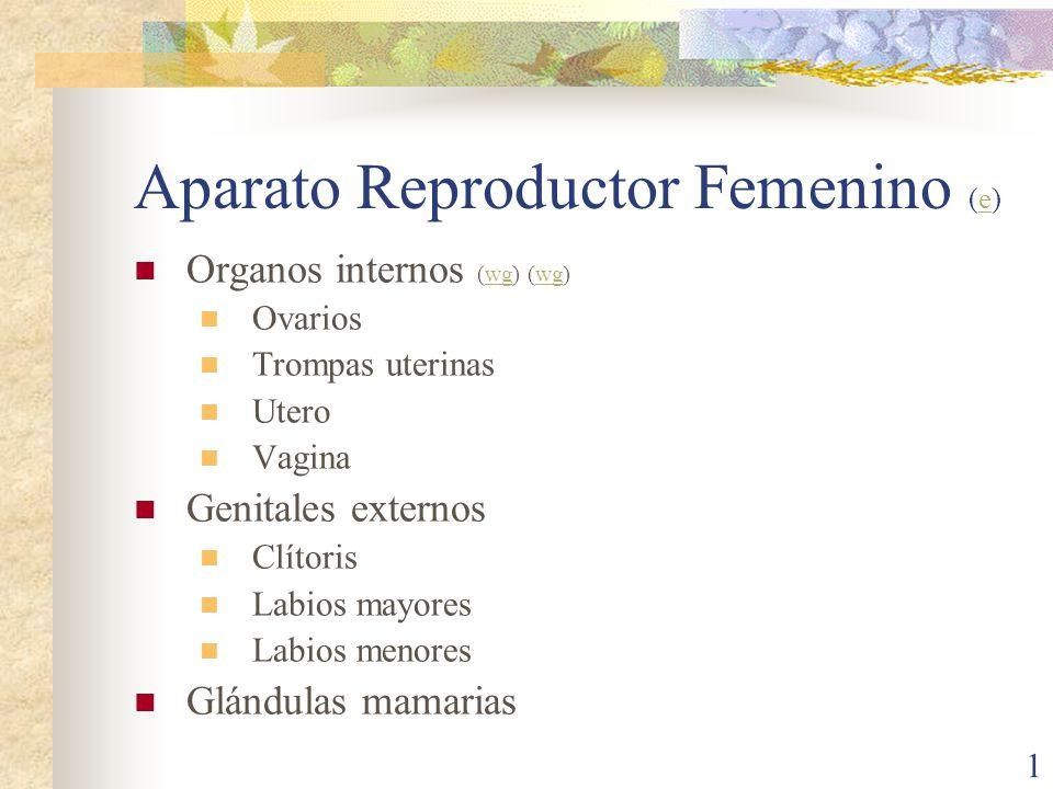 Aparato Reproductor Femenino (e)