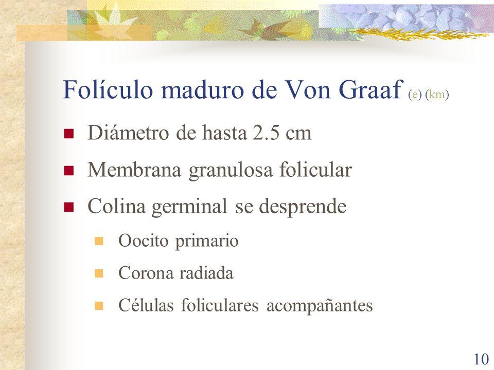 Folículo maduro de Von Graaf (e) (km)