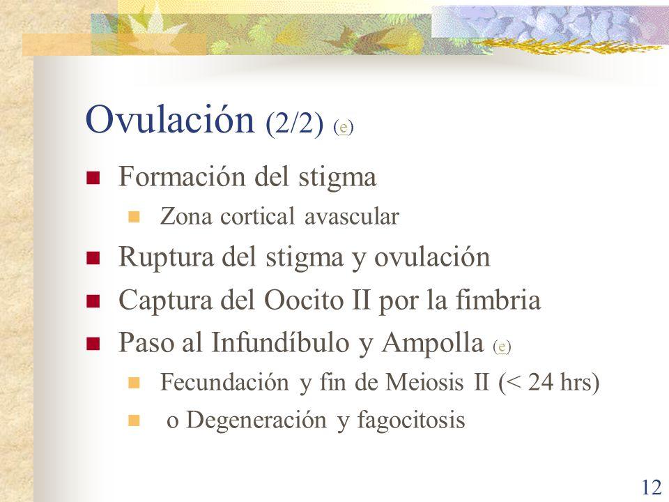 Ovulación (2/2) (e) Formación del stigma