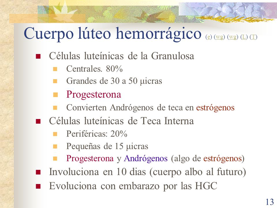 Cuerpo lúteo hemorrágico (e) (wg) (wg) (L) (T)