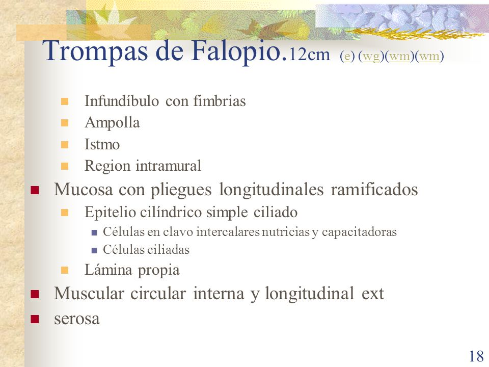 Trompas de Falopio.12cm (e) (wg)(wm)(wm)
