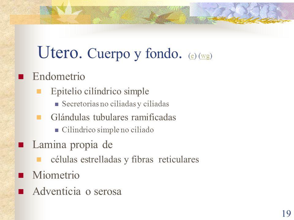 Utero. Cuerpo y fondo. (e) (wg)