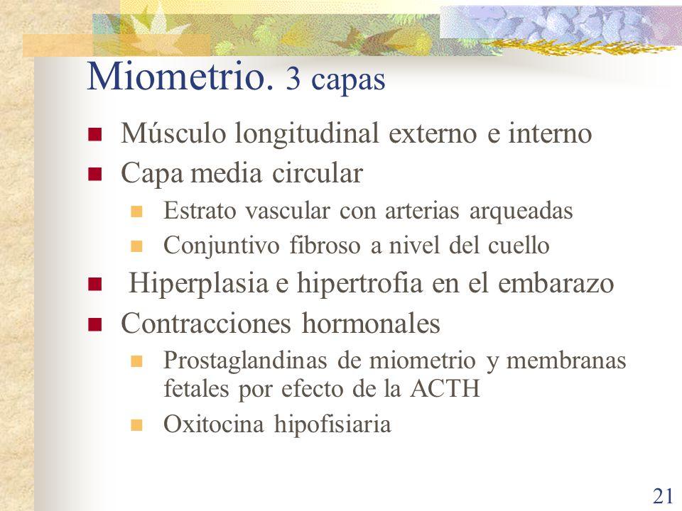 Miometrio. 3 capas Músculo longitudinal externo e interno