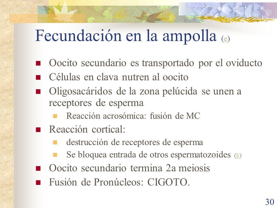 Fecundación en la ampolla (e)