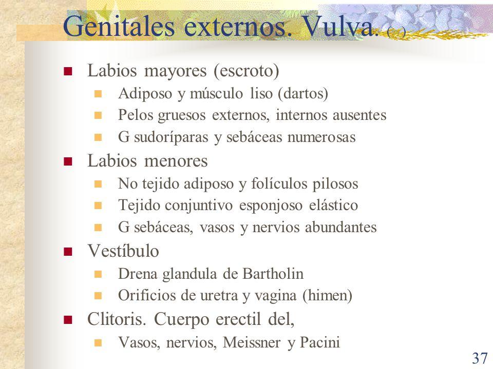 Genitales externos. Vulva. (w)