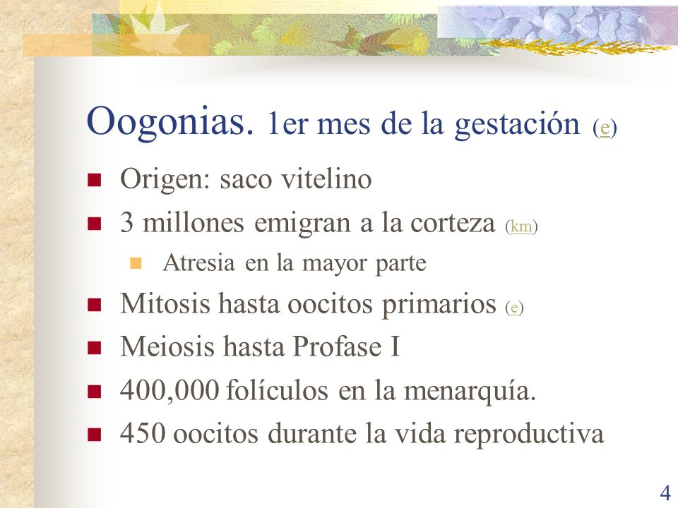 Oogonias. 1er mes de la gestación (e)