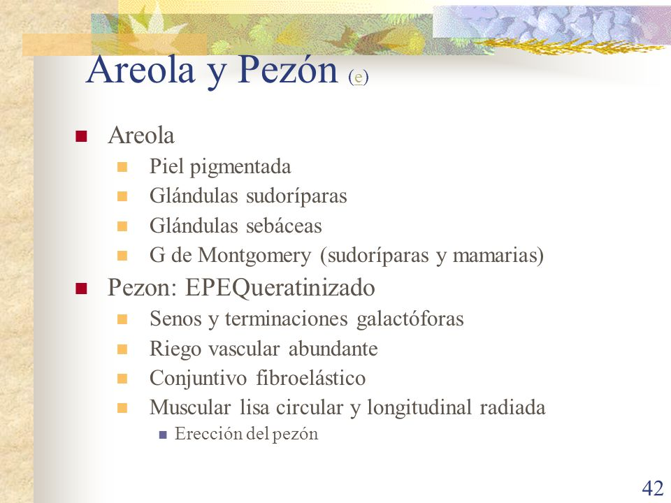 Areola y Pezón (e) Areola Pezon: EPEQueratinizado Piel pigmentada