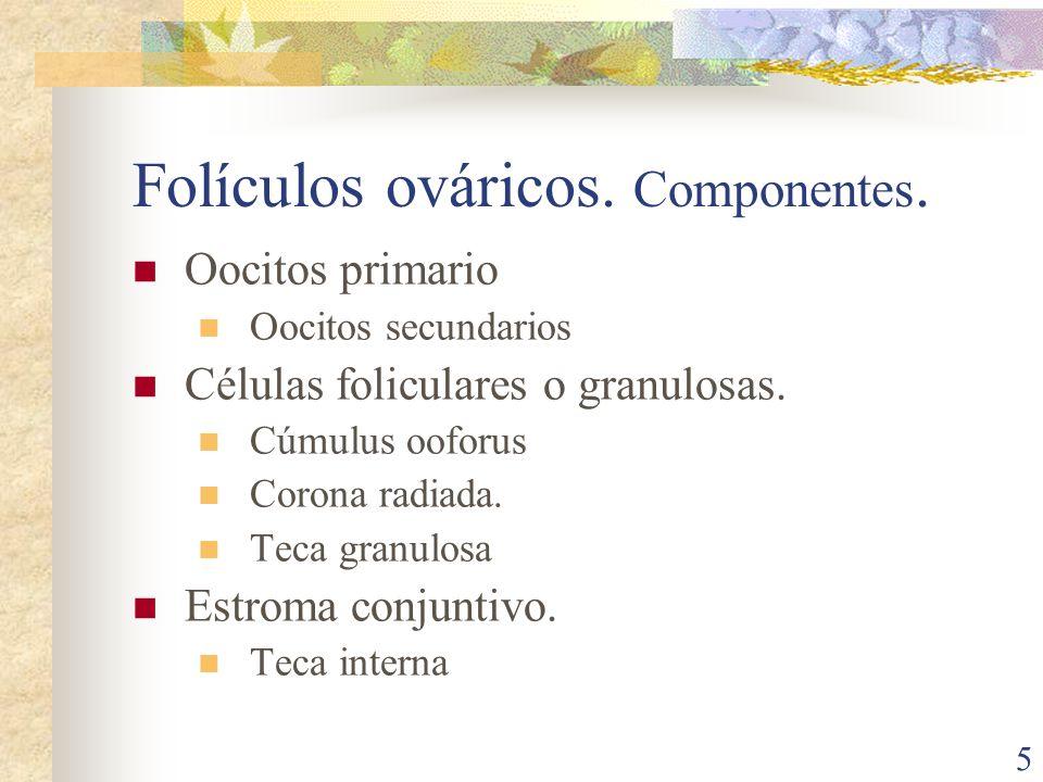 Folículos ováricos. Componentes.