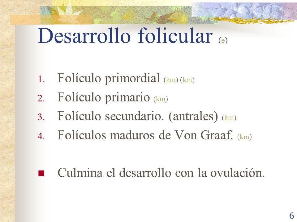 Desarrollo folicular (e)