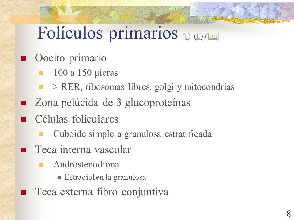 Folículos primarios (e) (L) (km)