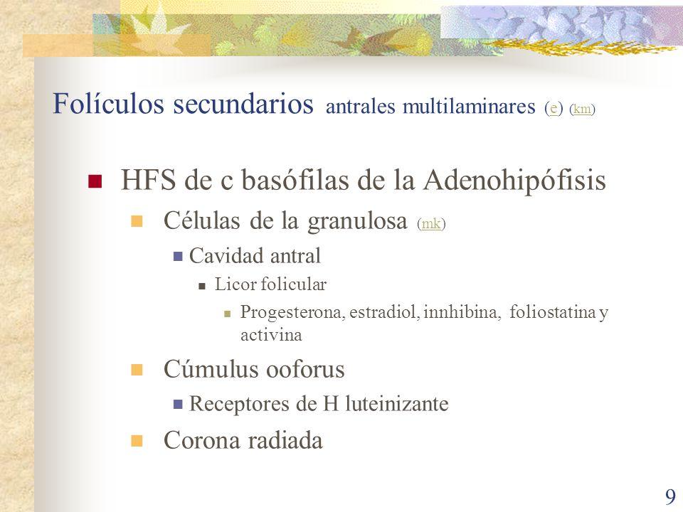 Folículos secundarios antrales multilaminares (e) (km)