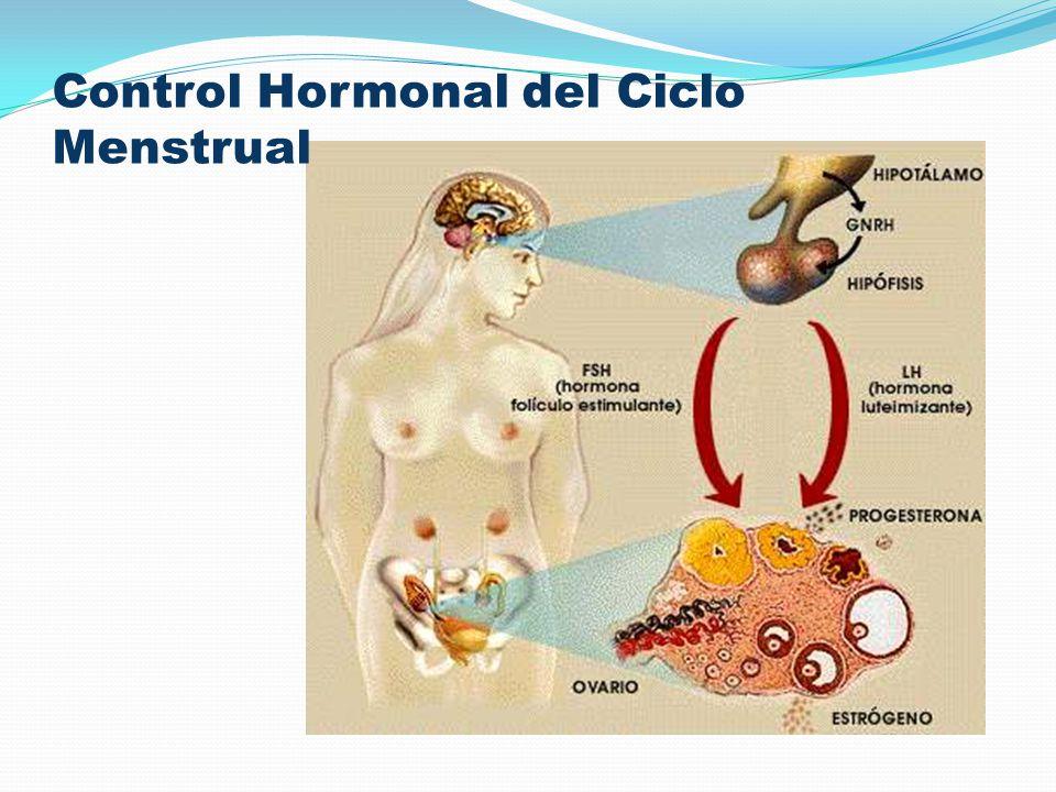 Control Hormonal del Ciclo Menstrual