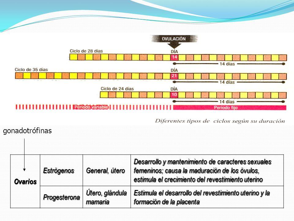gonadotrófinas Ovarios. Estrógenos. General, útero.