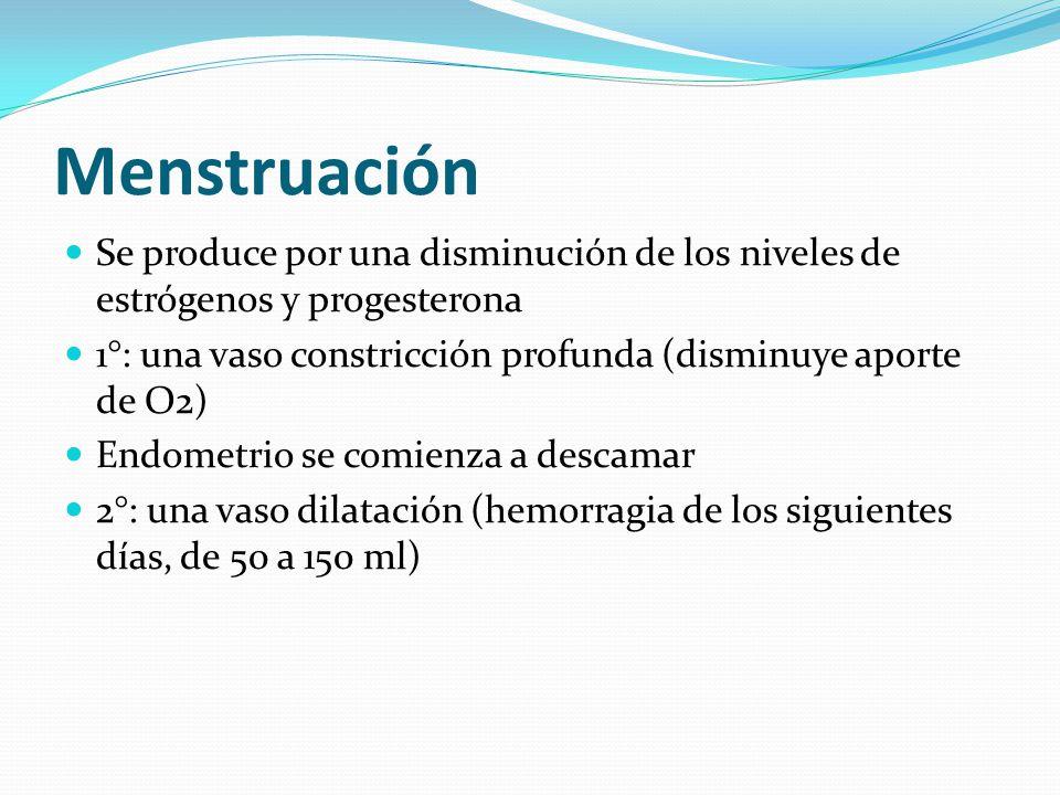 Menstruación Se produce por una disminución de los niveles de estrógenos y progesterona. 1°: una vaso constricción profunda (disminuye aporte de O2)